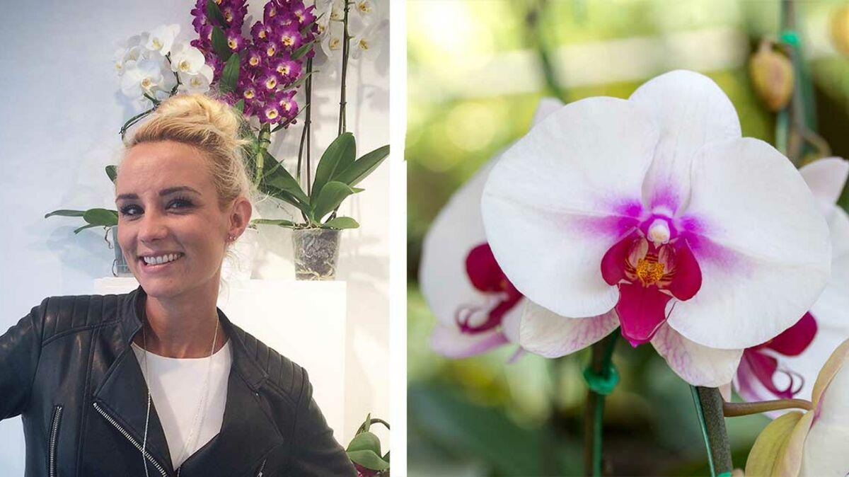 Comment S Occuper D Un Orchidée elodie gossuin : « l'orchidée est la miss univers des