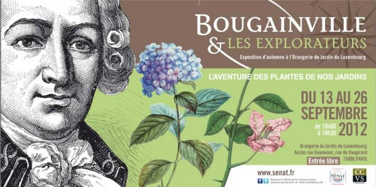 Exposition botanique à l'Orangerie du Sénat autour de Bougainville