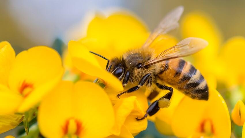 C'est la fête des abeilles aux Fermes de Gally !