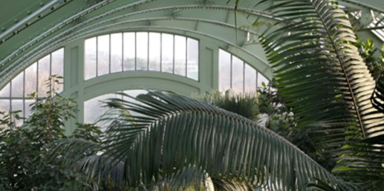 Les serres du Jardin des Plantes ouvertes au public