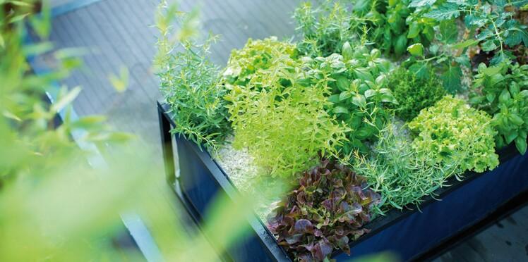 Botanic offre un bon d'achat de 5 euros contre vos pesticides