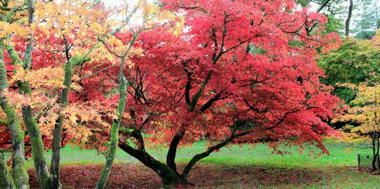 A la Sainte Catherine, je plante un arbre