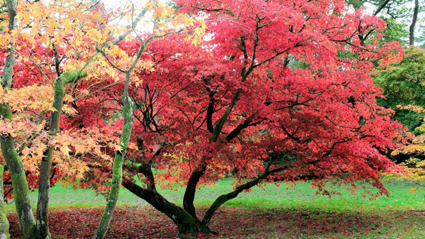 A la Sainte Catherine, on plante un arbre. Nos conseils pour ne pas se planter...