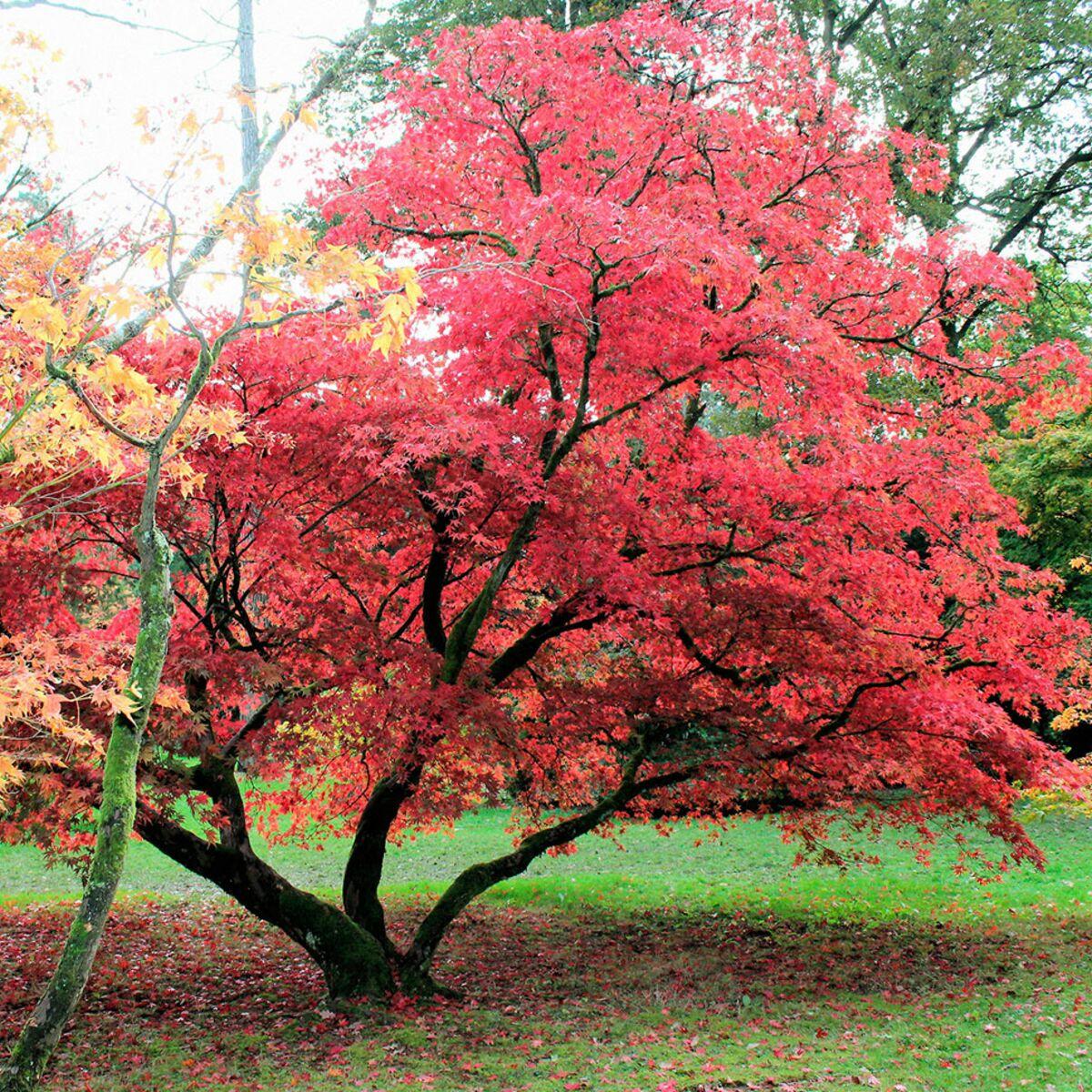 A la Sainte Catherine, on plante un arbre. Nos conseils pour ne ...