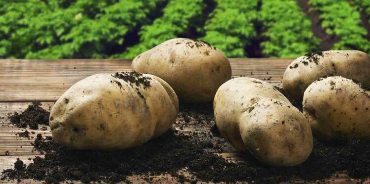 Jouez pour gagner des plants de pommes de terre pour vos balcons