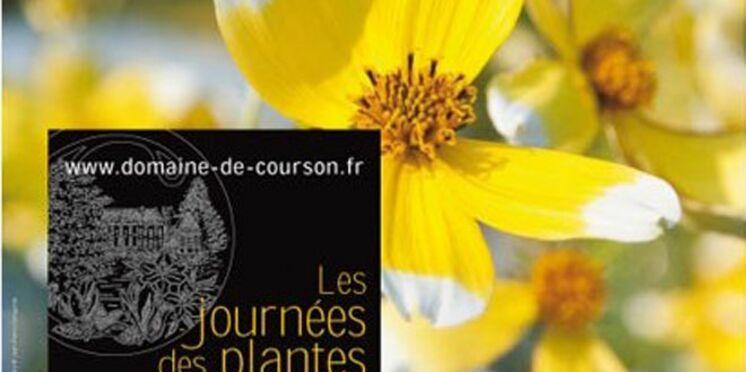 Le Domaine de Courson fête les plantes exubérantes