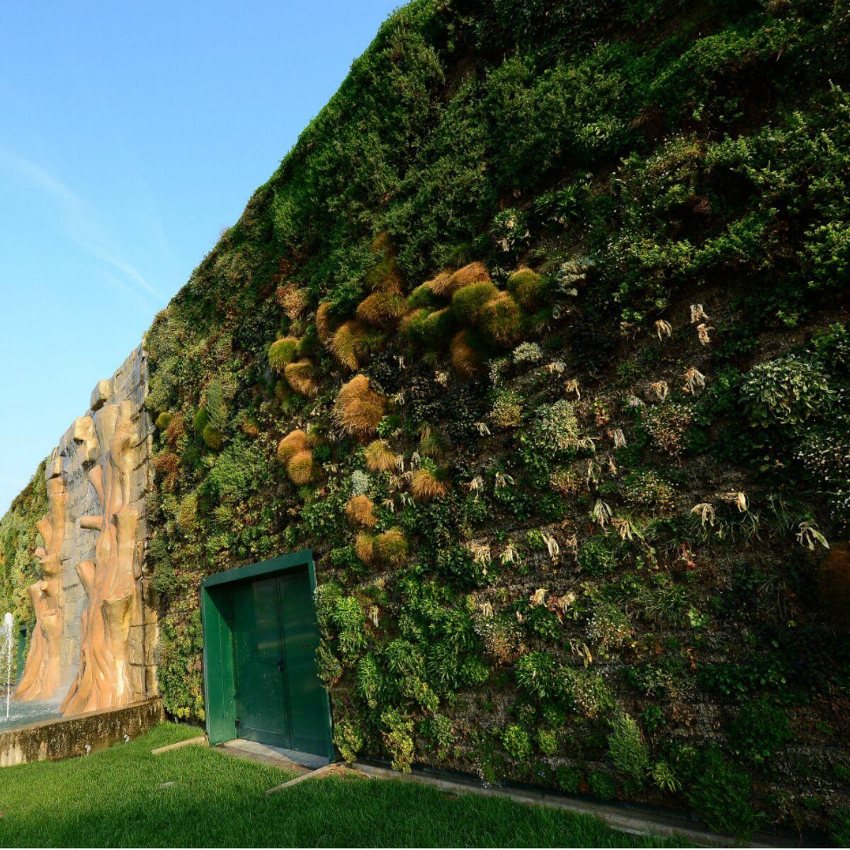 Mur Végétal Extérieur Palette le plus grand mur végétal entre dans le guinness : femme