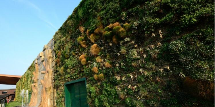 Le plus grand mur végétal entre dans le Guinness