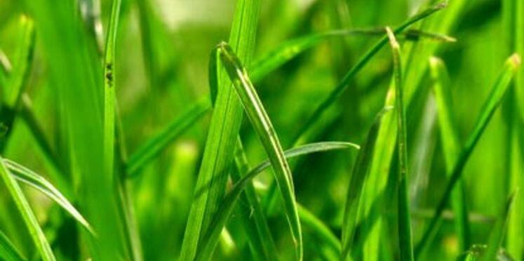 Les Français adeptes des espaces verts