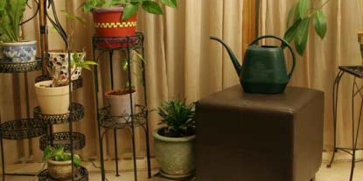Les plantes ne rendraient pas forcément l'air plus pur
