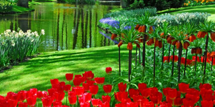 """Naissance d'une tulipe """"Thalys"""" au parc Keukenhof d'Amsterdam"""