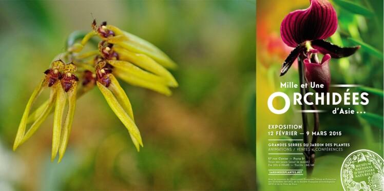 Orchidées : une exposition exceptionnelle
