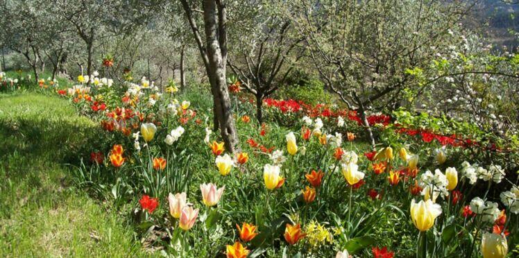 Regarder pousser les fleurs
