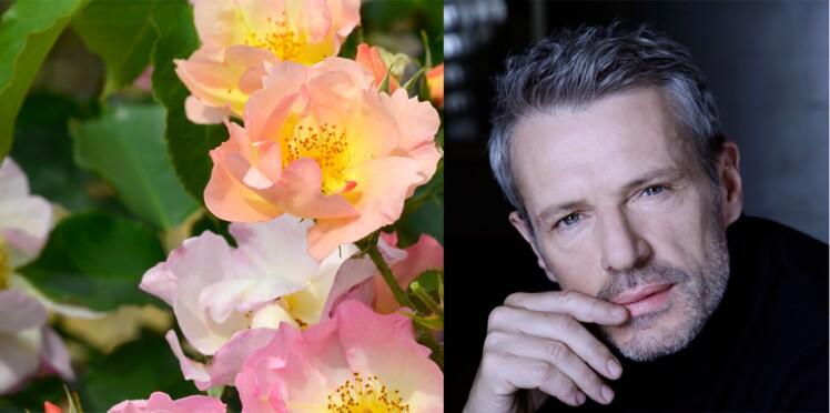 Une rose appelée Lambert Wilson