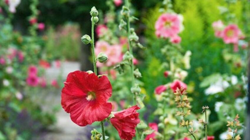 Salon de l'Agriculture : les visiteurs sensibilisés au jardinage écologique