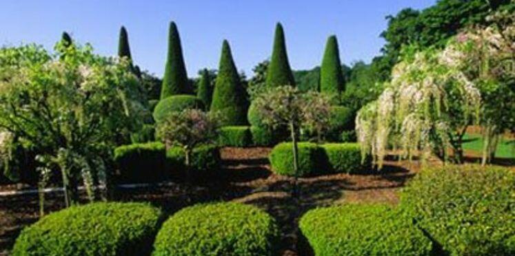 Vente aux enchères d'arbres de collection