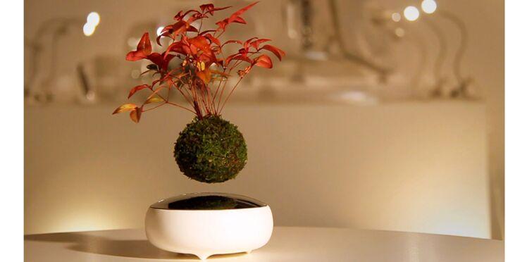 Les plantes d'intérieur volent avec le Air Bonsai