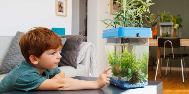 """""""L'aquaponie"""" : cultiver des plantes en élevant des poissons, comment ça marche?"""