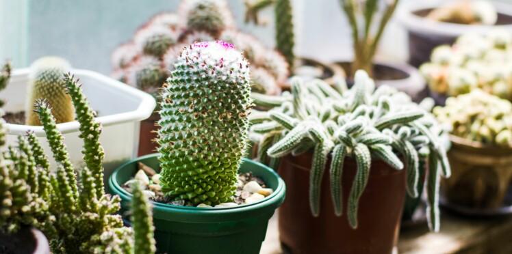 5 astuces pour bien entretenir ses plantes d'intérieur