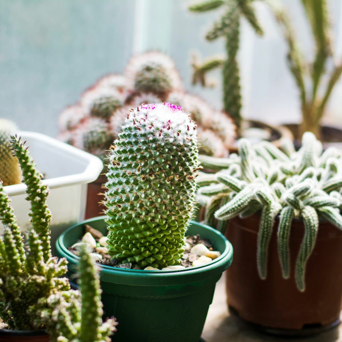 Plante D Intérieur Qui Aime La Chaleur 5 astuces pour bien entretenir ses plantes d'intérieur