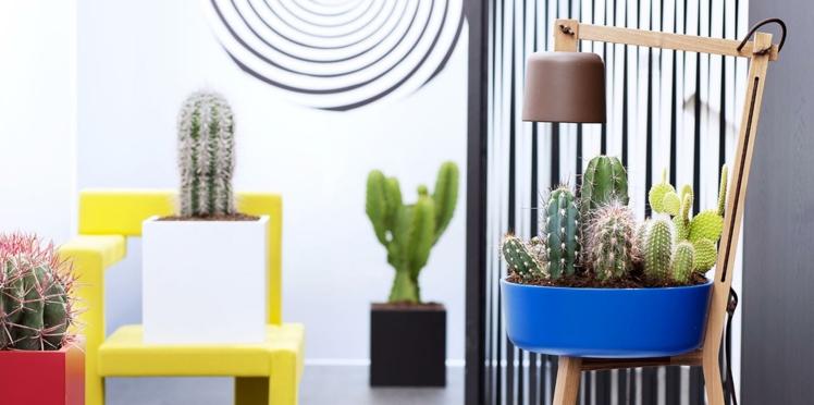 Cactus : de belles idées déco et tous nos conseils