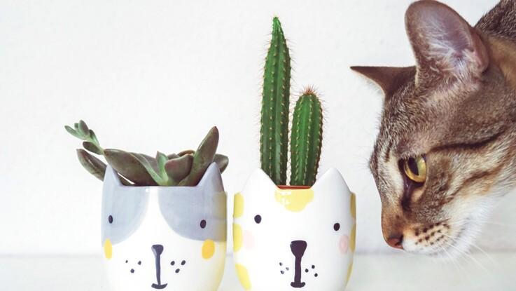 Comment faire pour que votre chat ne ruine pas vos plantes vertes ?