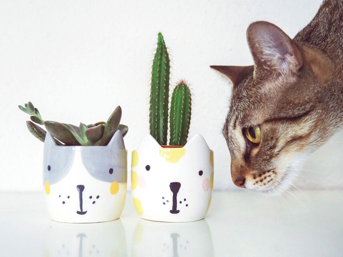 Griffoir Chat Fait Maison comment faire pour que votre chat ne ruine pas vos plantes