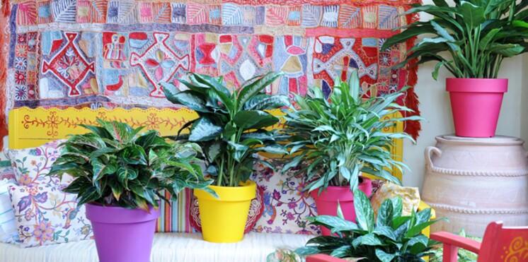 quelle plante verte pour quelle pi ce de votre int rieur. Black Bedroom Furniture Sets. Home Design Ideas