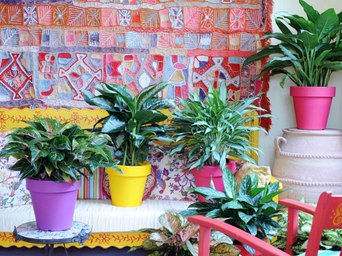 Plante D Intérieur Qui Aime La Chaleur quelle plante verte pour quelle pièce de votre intérieur