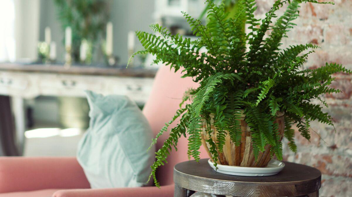 Comment Arroser Mes Plantes Pendant Les Vacances comment éviter que vos plantes meurent pendant vos vacances