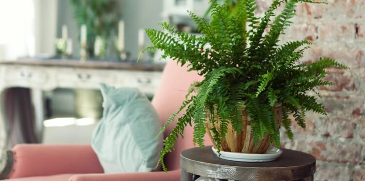 Comment éviter que vos plantes meurent pendant vos vacances ?