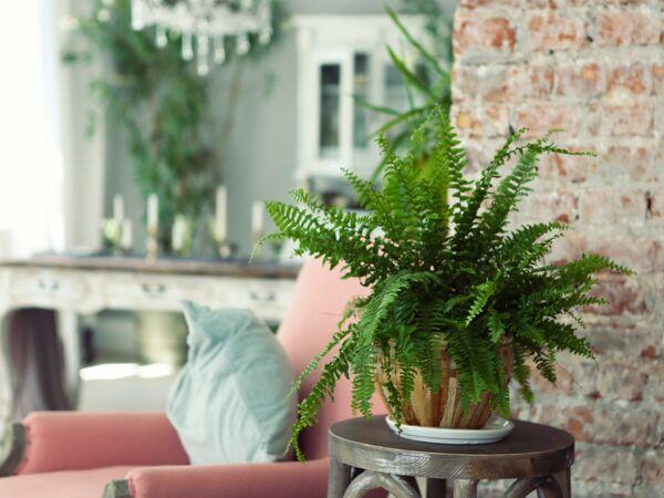 plante d 39 int rieur articles vid os dossiers et diapo femme actuelle le mag. Black Bedroom Furniture Sets. Home Design Ideas