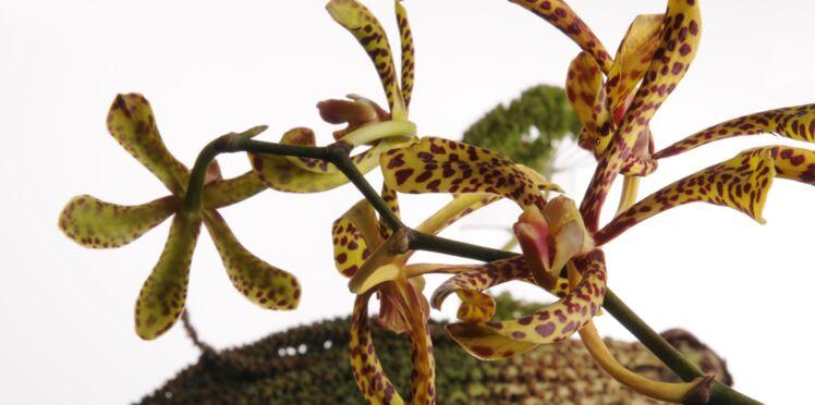 Comment faire des beaux bouquets d'orchidées
