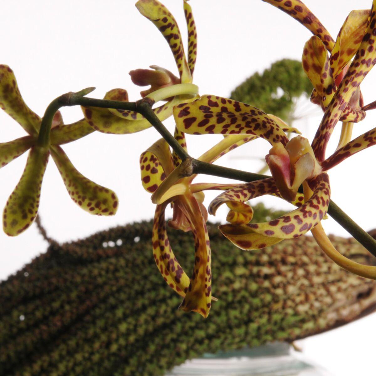 Comment Planter Une Orchidée comment faire des beaux bouquets d'orchidées : femme