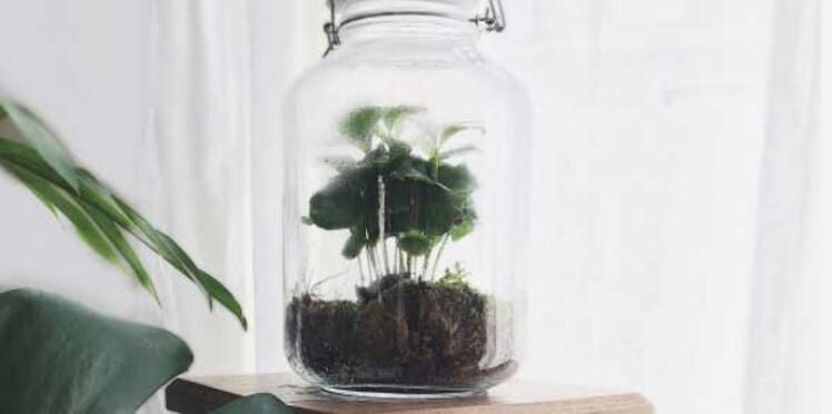 Comment créer et entretenir un terrarium ?