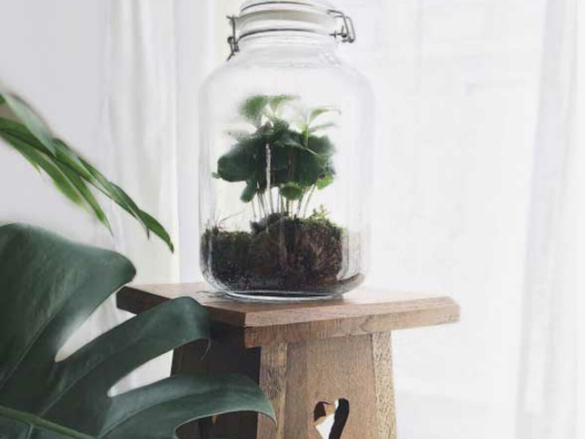 Comment Faire Un Terrarium Plante Grasse comment créer et entretenir un terrarium ? : femme actuelle