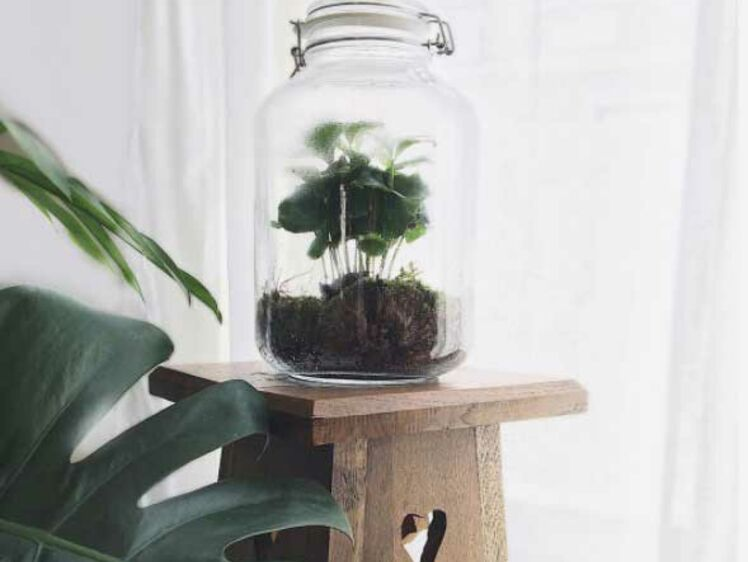 comment cr er et entretenir un terrarium femme actuelle le mag. Black Bedroom Furniture Sets. Home Design Ideas