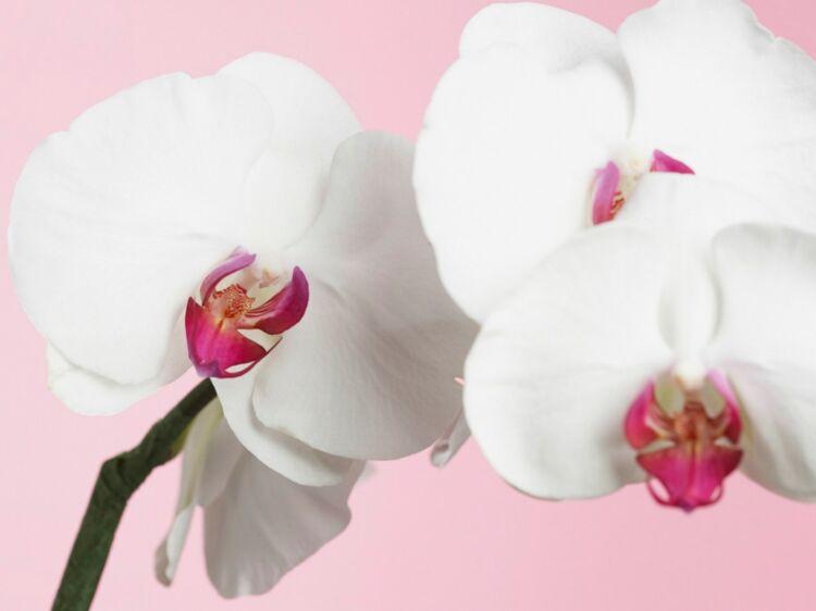Comment Faire Refleurir Une Orchidee Premiere Etape Coupez La
