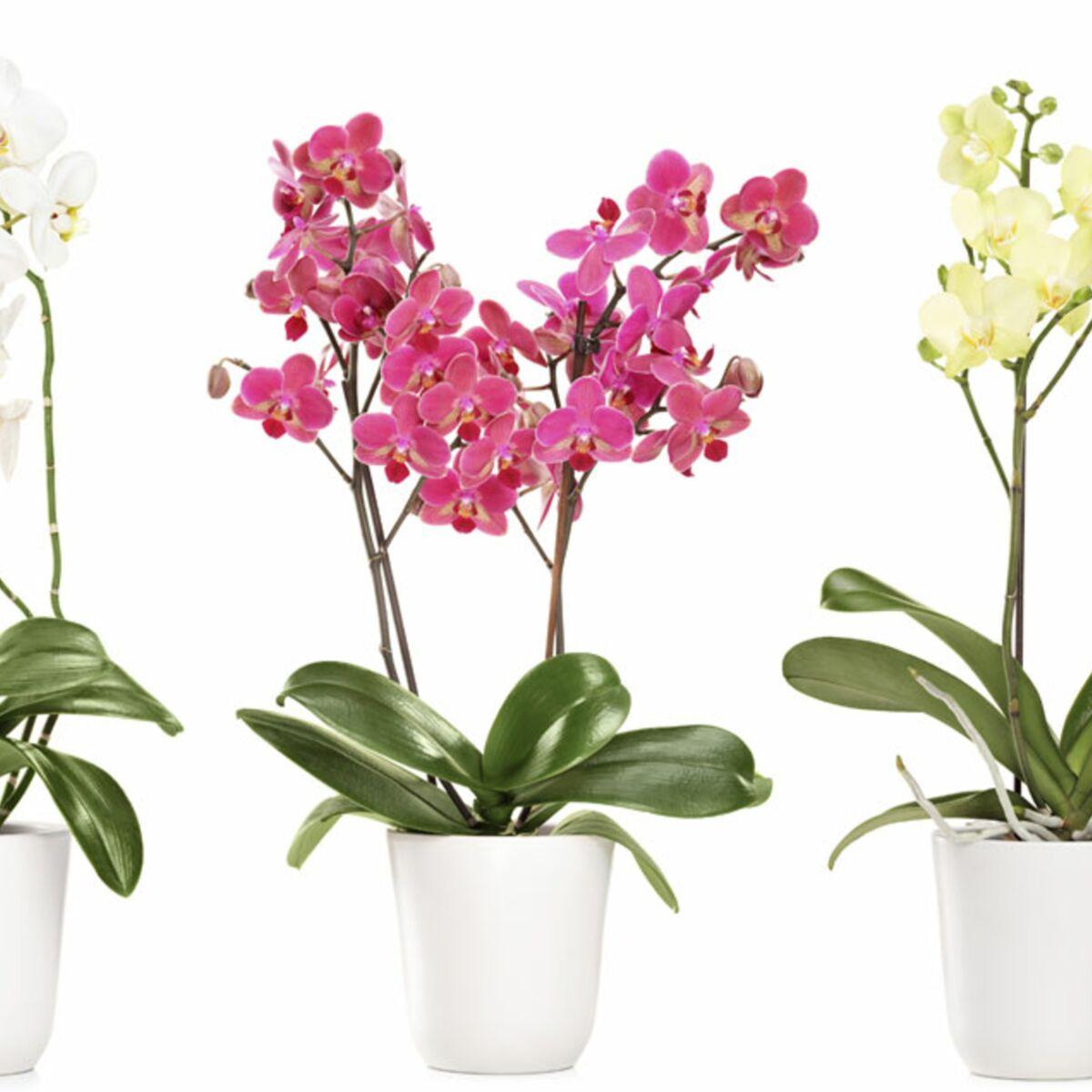 Comment Planter Une Orchidée comment rempoter ses orchidées : femme actuelle le mag