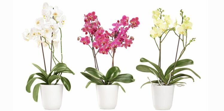 Comment rempoter ses orchidées