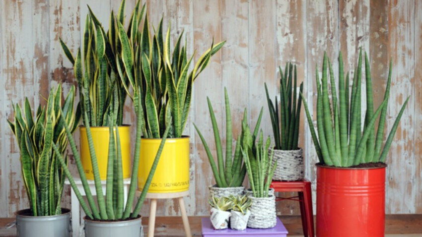 Nos astuces pour une plante verte en pleine forme