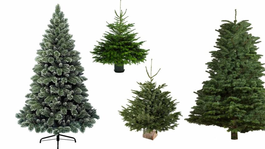 Nos conseils pour bien choisir votre sapin de Noël