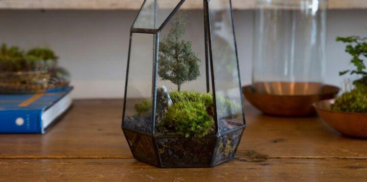 DIY : Un terrarium à faire soi-même