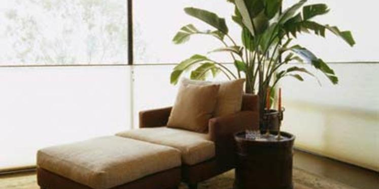 Quelles plantes d'intérieur ont un feuillage spectaculaire