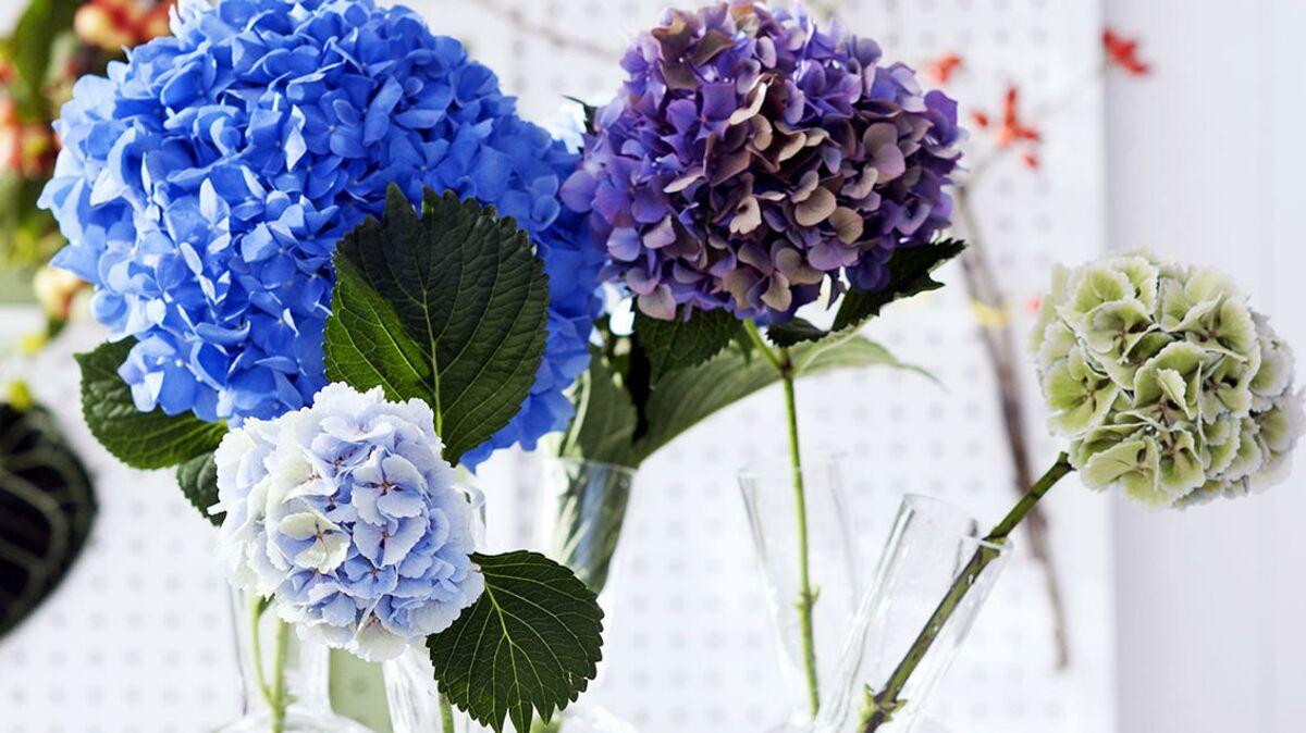 100 Génial Suggestions Comment Conserver Un Bouquet D Hortensia