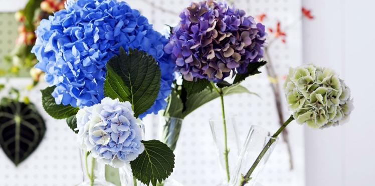 Hortensia, nos conseils pour bien conserver vos bouquets