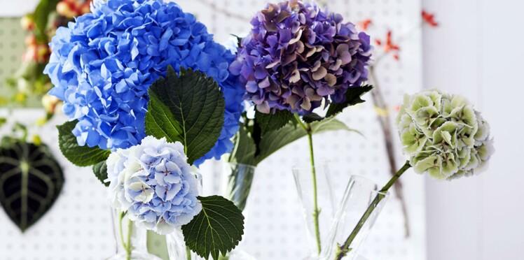 hortensia nos conseils pour bien conserver vos bouquets femme actuelle le mag. Black Bedroom Furniture Sets. Home Design Ideas