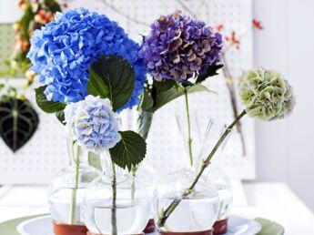 art floral une boule d 39 hortensias femme actuelle le mag. Black Bedroom Furniture Sets. Home Design Ideas