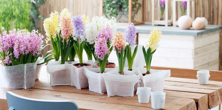 La jacinthe, notre fleur préférée pour les fêtes