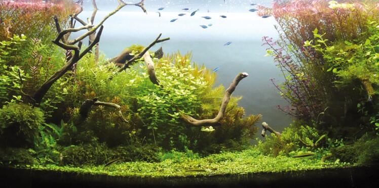 L'aquascape : un paysage dans votre aquarium